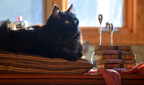 Laurence Sterne's sermons give Mr. Rollie pause...