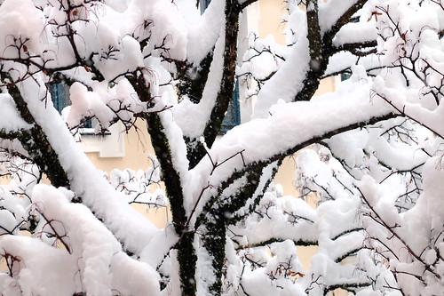 wintertree snow viewfrommywindow badreichenhall