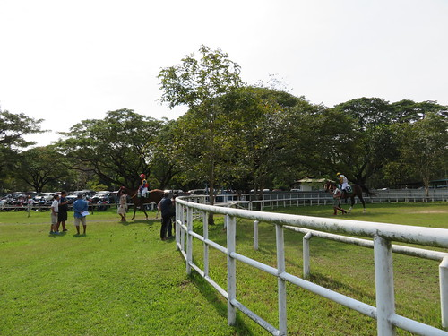 チェンマイ競馬場のパドックから本馬場へ向かう馬たち