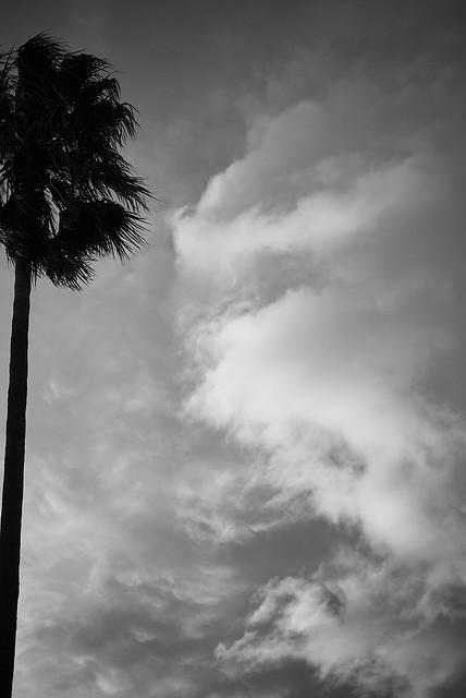 california_dreaming_L2016471