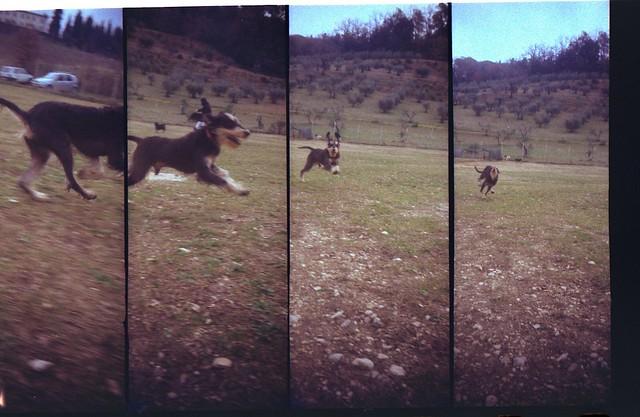 Supersampler dogs!