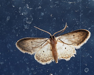 Moth on glass from underneath