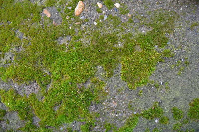 Mossy concrete texture #01