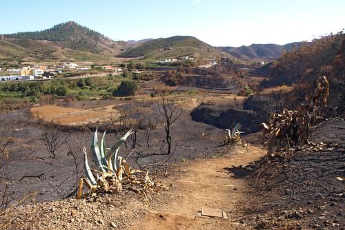 Fire ravaged Erjos, Tenerife | by BuzzTrips