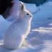 Sunbathing Bunny (Explored) by JLS Photography - Alaska