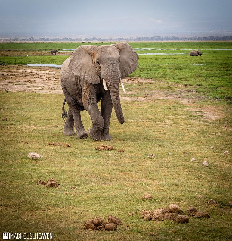 Kenya - 0730