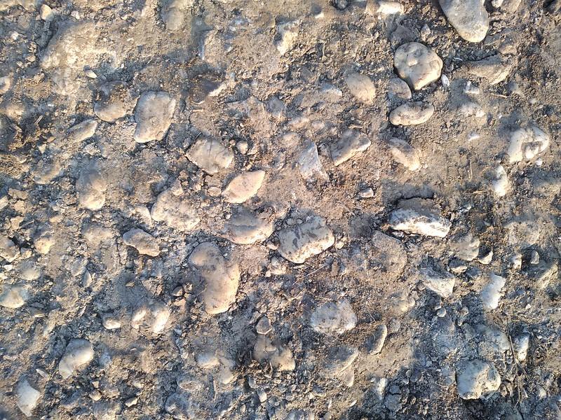 Ground Texture 11