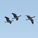 Safer Skies: For Birds and People
