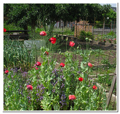 community garden_5247