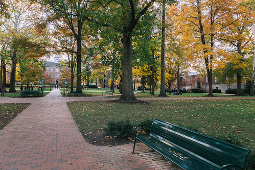 College Green | by foshydog