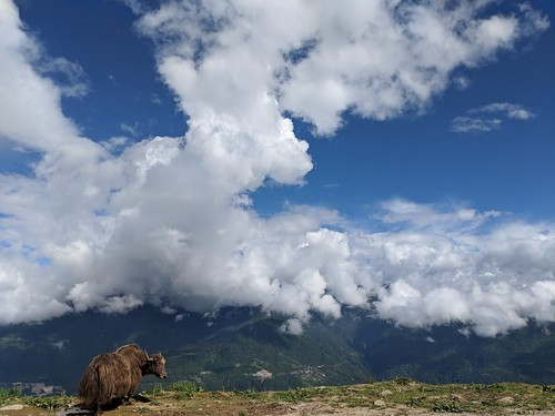 well, yaks too enjoy a good view | by ric03uec