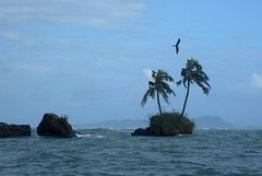 Island with Palm Trees and Frigatebirds