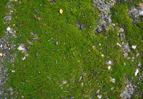 Mossy concrete texture #06 | by texturepalace