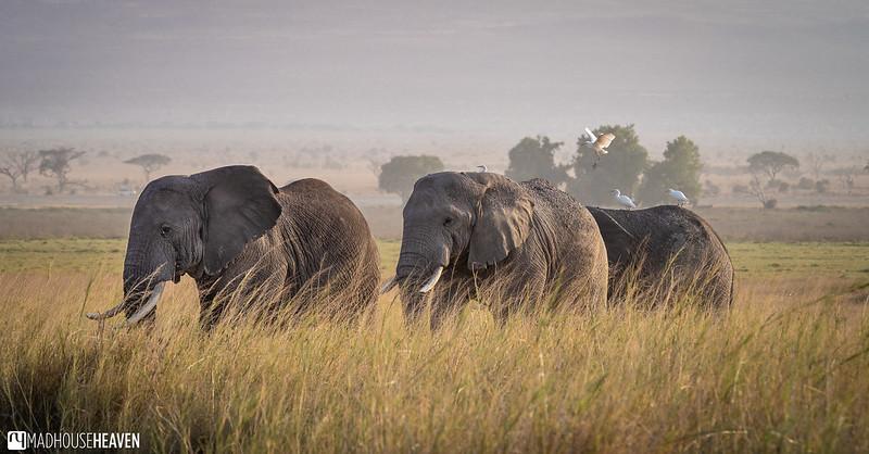 Kenya - 0092
