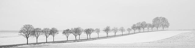 Arbres en hiver - Trees in winter
