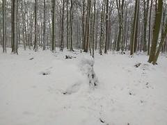 1. Februar 2019 - 9:35 - Winterspaziergang durch Roxel am 1. Februar 2019