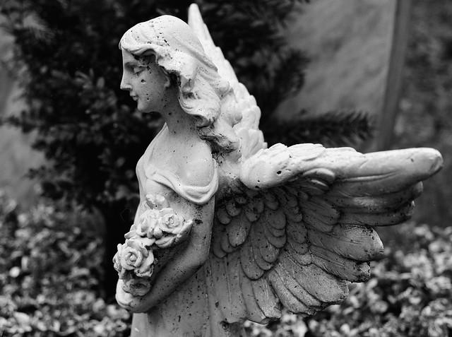 Profilierter Engel - I shot film (Crop)