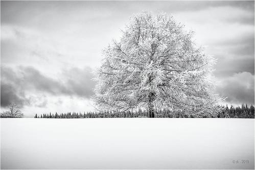 anlässe bäume em5ii fototour himmel mzuiko1250 omd olympus pflanzen rahmen schnee schneeschuhtour schwäbischealb solitär wald winter wolken bw clouds frame monochrome sw sky trees woods metzingen badenwürttemberg deutschland de