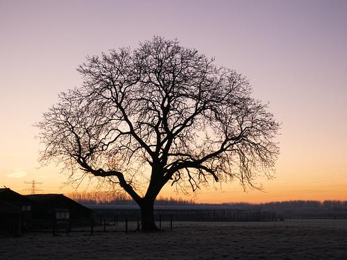 zonsopkomst nederland vroegeochtend silhouette landschap woonwerk provincieutrecht thenetherlands オランダ commute landscape netherlands sunrise dawn earlymorning ochtendstond bunnik utrecht nl tree boom beeldmark panasonic gm1