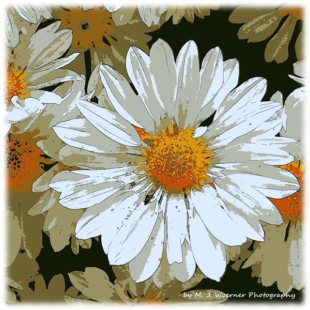 Chrysanthemum Abstraction 01