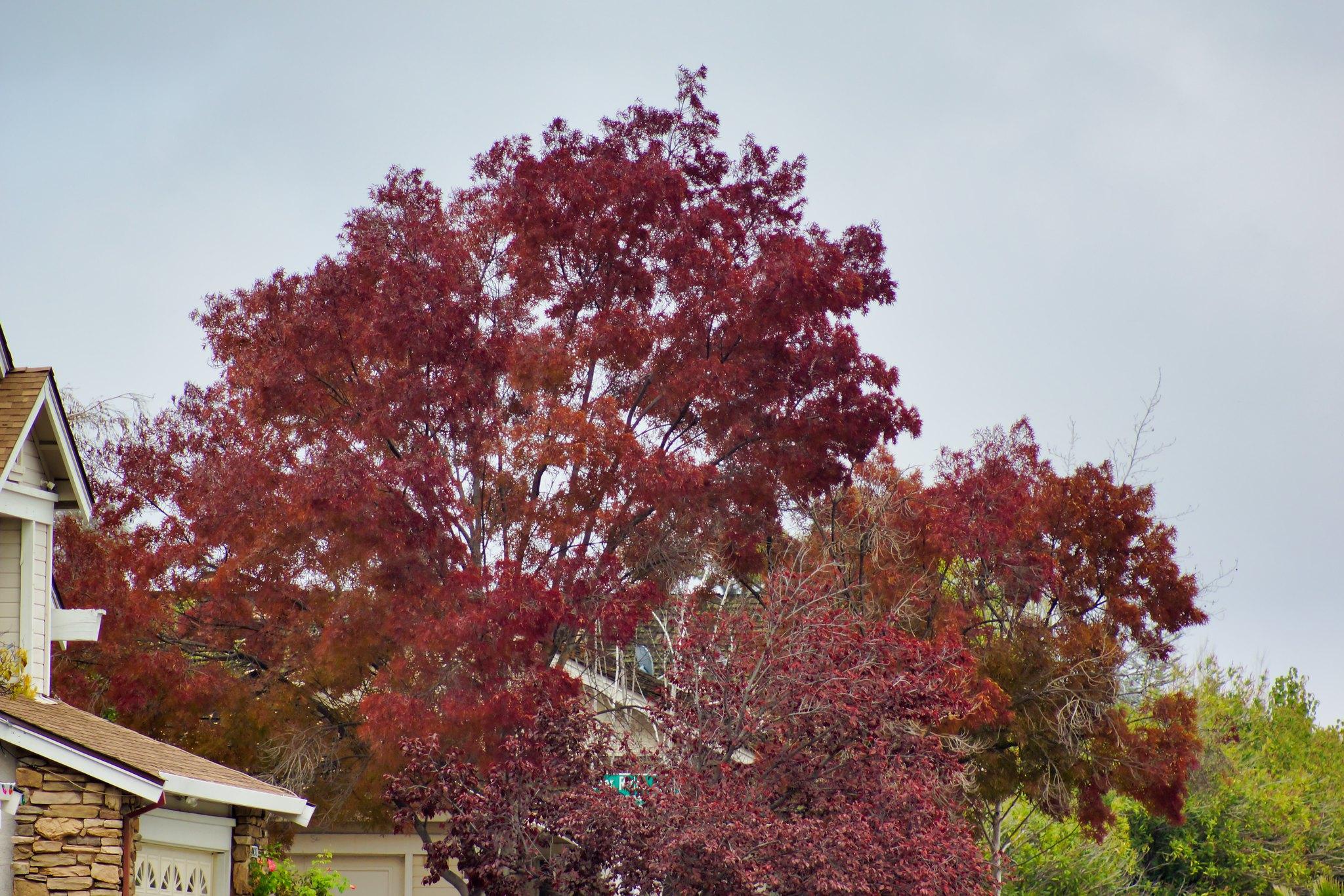 2018-11-28 - More Neighbors' Trees