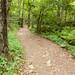 Stony Man Trail