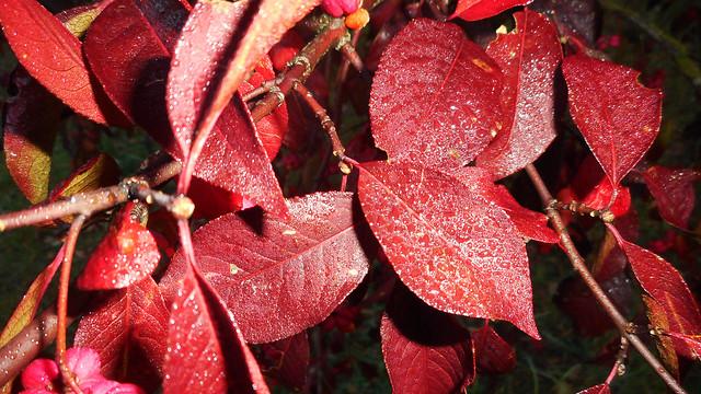 Autumn Macro 19