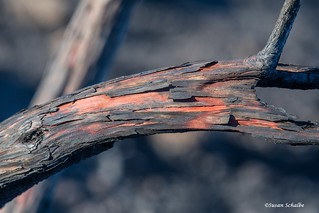 Charred branch | by Photosuze