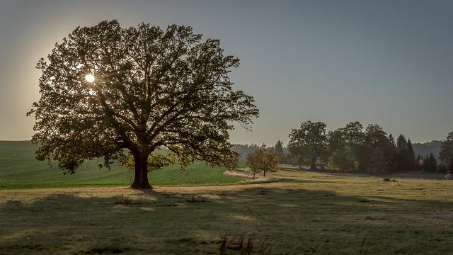 the sun in the oak tree - Die Sonne im Eichenbaum