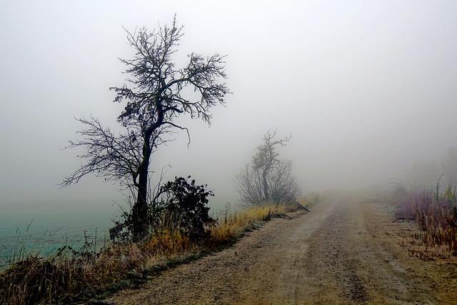 Nebellandschaft - Foggy landscape