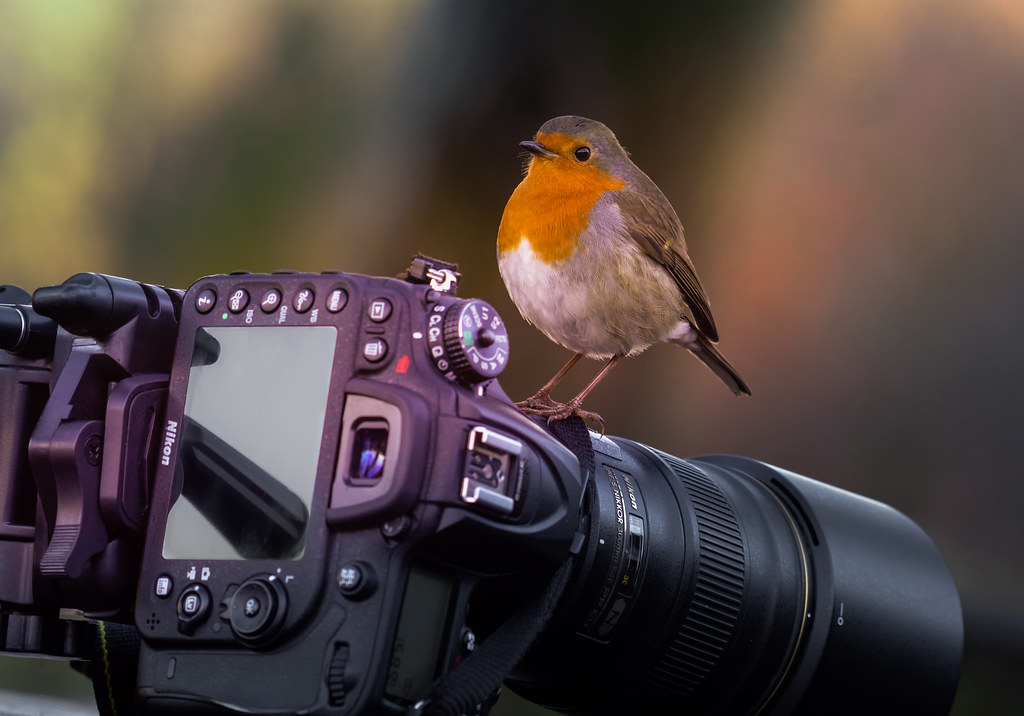 Robin- Camera-Action. Take one.