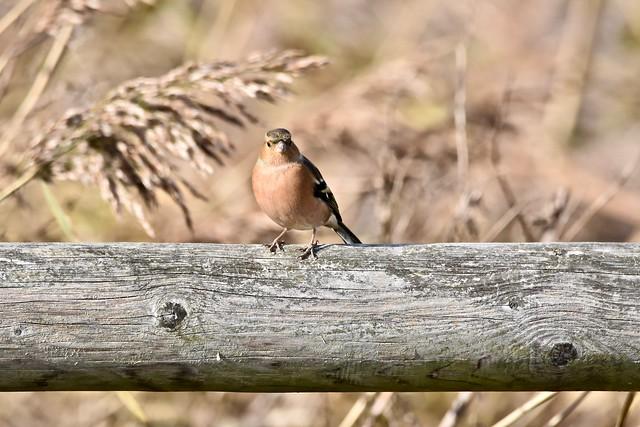 Watch the birdie.