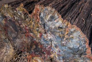 Long Logs Trail, Petrified Forest National Park | by Brandon Kopp