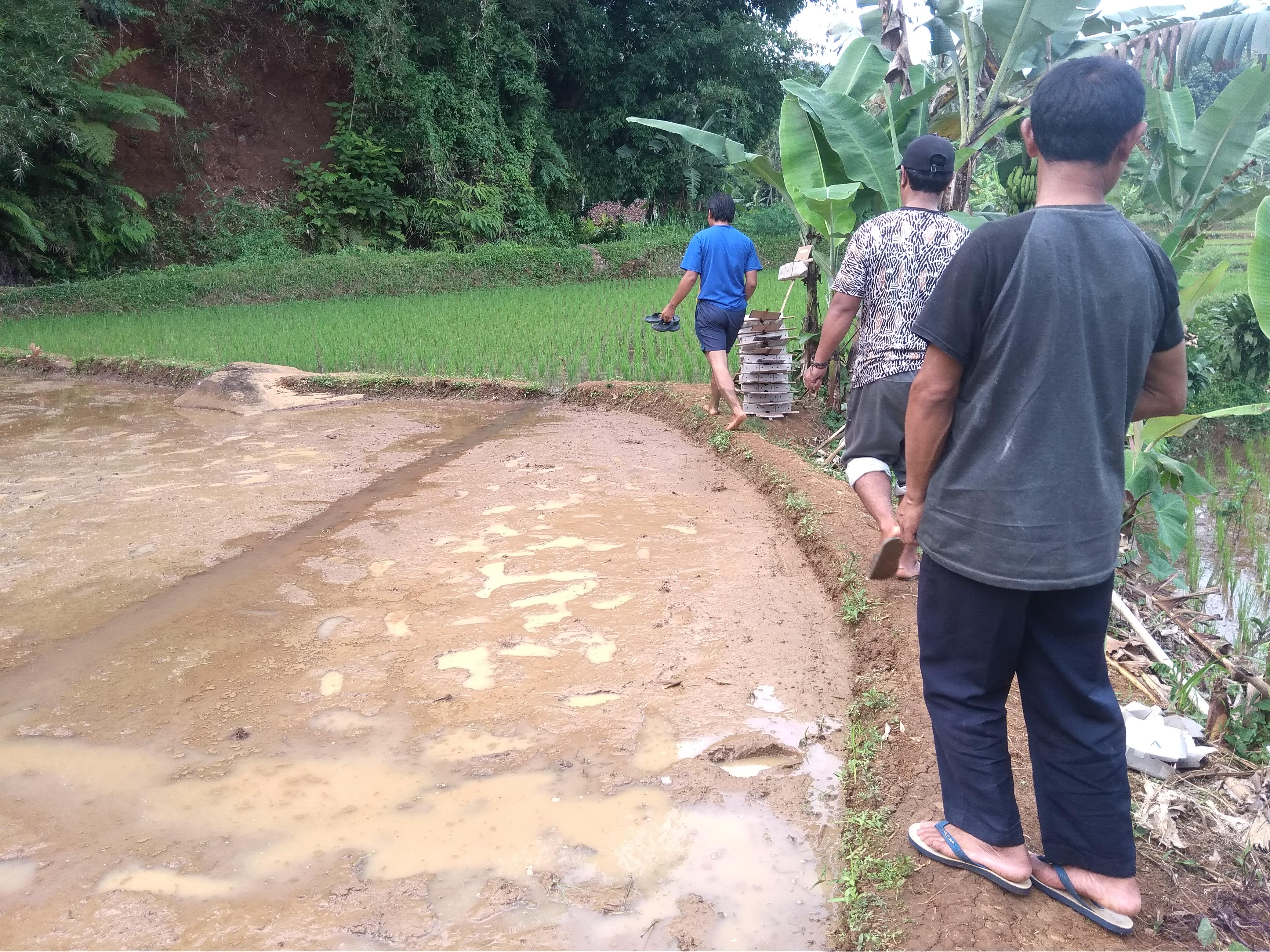 Sekolah Lapang – Padi Sukabumi