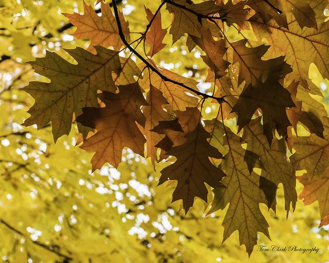 colors of the season
