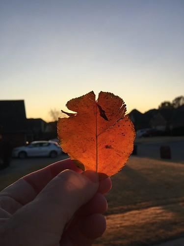 november2018 skywatch leaf sunrise
