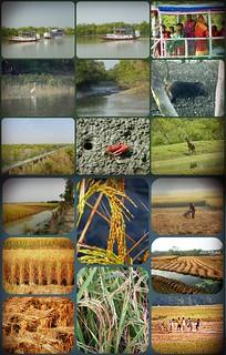 Sundarbans - collage Park and rice