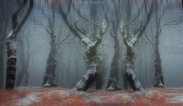 El día de las luces en el bosque //the day of the lights in the forest