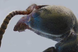 100 pics stack of an ant