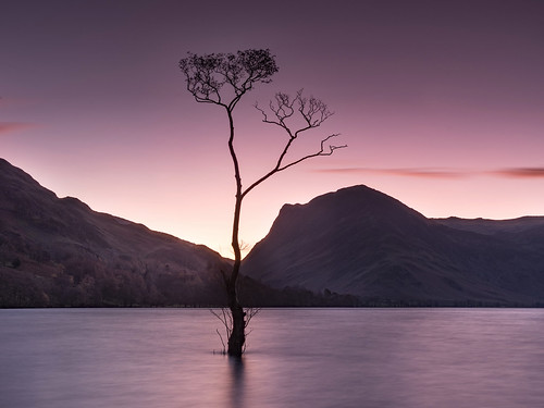 Lone Tree at Buttermere Many thanks to Paul Turner | by The Fisherbeck, Ambleside
