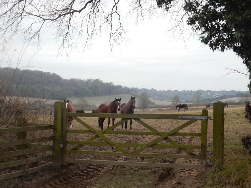 Horses Little Kimble to Saunderton
