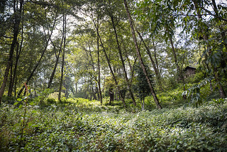 Sikkim | by galibert olivier