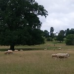Tue, 07/10/2018 - 09:06 - Beautiful agroforestry landscape at Launde Abbey (by Jo Smith)
