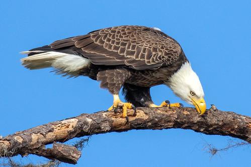 outdoor sky nature wildlife 7dm2 ocean eagle closeup bird prey