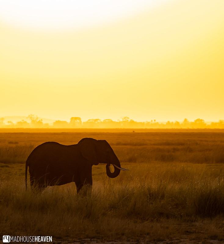 Kenya - 0181