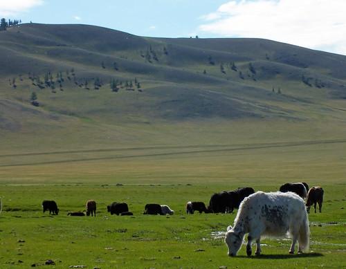 asia mongolia dragoman overland landscape dana iwachow june july 2018