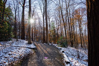 Chapin Forest - 11/23/18 | by PhotosbyMariposa