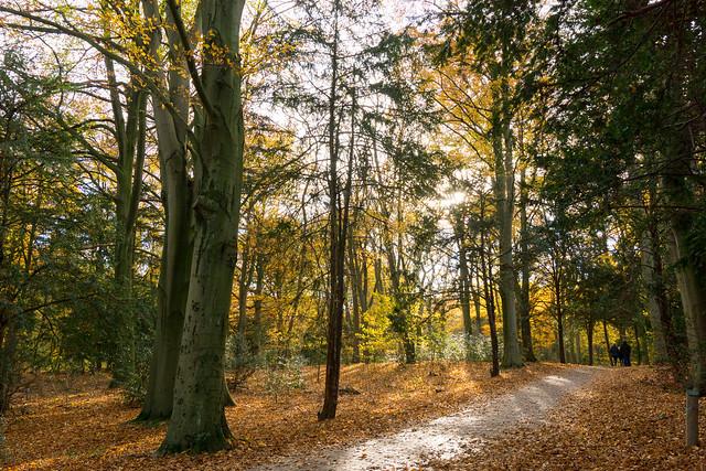 De Horsten forest