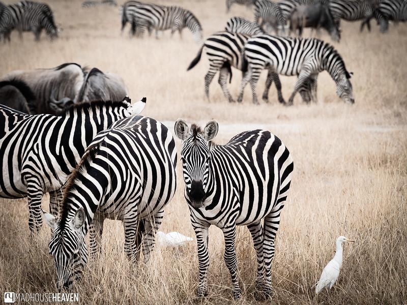 Kenya - 0321