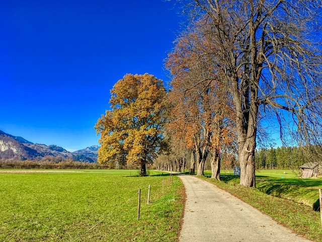 Trees in autumn lining a small rural road near Ebbs, Tyrol, Austria